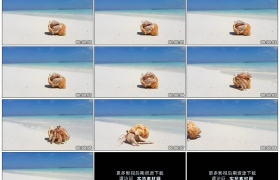 4K实拍视频素材丨夏天海滩上一只寄居蟹爬过