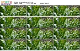 高清实拍视频素材丨雨天雨水滴落到绿色草叶上