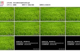 高清实拍视频丨风吹过稻田泛起绿色波浪