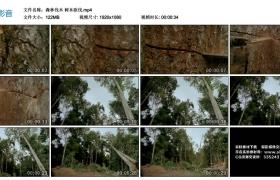 高清实拍视频丨森林伐木 树木砍伐