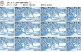 高清实拍视频丨冬天阳光照射着积雪的树枝