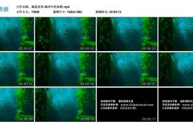 高清实拍视频丨海底世界-海洋中的鱼群