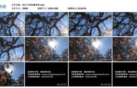 【高清实拍素材】阳光下的枯藤老树