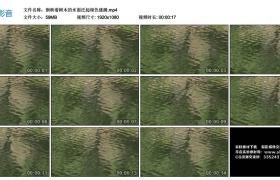 高清实拍视频丨倒映着树木的水面泛起绿色涟漪