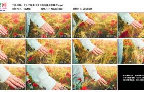 高清实拍视频丨女人手抚摸过麦田的麦穗和罂粟花
