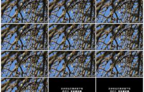 高清实拍视频素材丨秋天树叶掉光的苹果树树枝