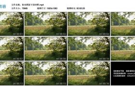 高清实拍视频丨阳光照射下的田野