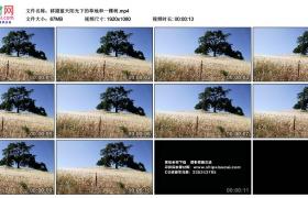 高清实拍视频丨移摄蓝天阳光下的草地和一棵树