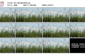 高清实拍视频丨晴空下随风摆动的野草