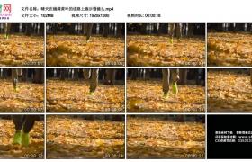 高清实拍视频丨晴天在铺满黄叶的道路上跑步慢镜头