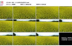 4K视频素材丨航拍一大片金黄色的油菜花田