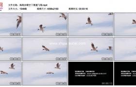 4K实拍视频素材丨海鸥在晴空下展翅飞翔