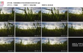 高清实拍视频素材丨轨道拍摄逆光中阳光照射着农田里的禾苗