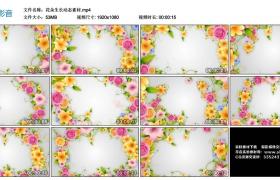 高清动态视频丨花朵生长动态素材