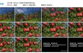 高清实拍视频丨蓝天白云下挂满红苹果的苹果园