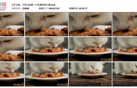 4K实拍视频素材丨大特写拍摄一只吃猫粮的白猫