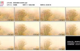 高清实拍视频丨浓雾弥漫秋天的树林