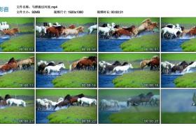 【高清实拍素材】马群跑过河流