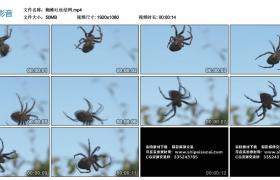 高清实拍视频丨蜘蛛吐丝结网