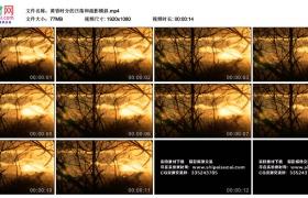 高清实拍视频丨黄昏时分的日落和疏影横斜