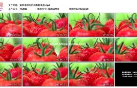 4K实拍视频素材丨旋转着的红色的新鲜番茄