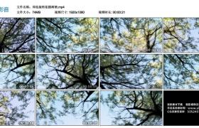 高清实拍视频丨仰拍旋转拍摄树梢