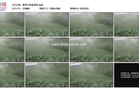 高清实拍视频素材丨晨雾中的蔬菜园