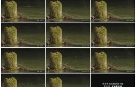 高清实拍视频素材丨小河里河水淙淙流淌