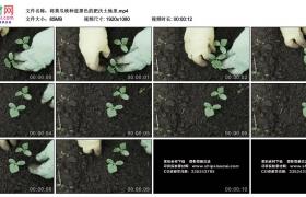 高清实拍视频素材丨将黄瓜秧种进黑色的肥沃土地里