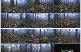 高清实拍视频素材丨行走在秋天铺满落叶的森林里主观镜头