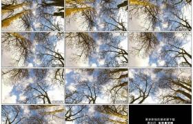 高清实拍视频素材丨仰拍冬天天空下光秃秃的树干