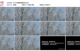 高清实拍视频丨冬天白雪飘落覆盖树枝