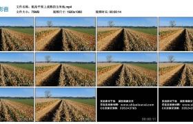 高清实拍视频丨航拍平原上成熟的玉米地