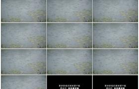 高清实拍视频素材丨下雨天雨水滴落到漂着睡莲叶子的湖面上