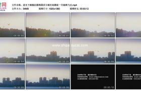 高清实拍视频素材丨逆光下跟随拍摄韩国首尔城市高楼前一只海鸥飞过