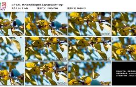 高清实拍视频素材丨秋天阳光照射着树枝上随风摆动的黄叶