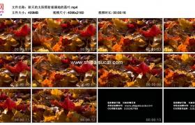 4K实拍视频素材丨秋天的太阳照射着满地的落叶
