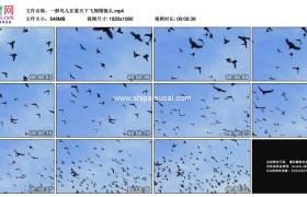 高清实拍视频素材丨一群鸟儿在蓝天下飞翔慢镜头
