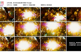 高清实拍视频丨秋天阳光透过黄叶照射下来