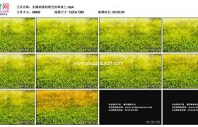 高清实拍视频素材丨水滴洒落到绿色的草地上