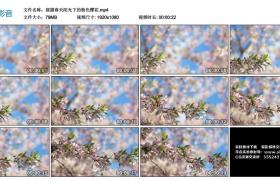 高清实拍视频丨摇摄春天阳光下的粉色樱花