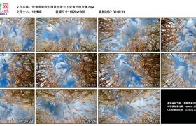 高清实拍视频丨低角度旋转拍摄蓝天流云下金黄色的麦穗