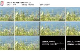 高清实拍视频丨狗尾草前景下的森林和乡村