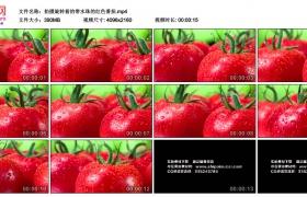 4K实拍视频素材丨拍摄旋转着的带水珠的红色番茄