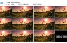 【高清实拍素材】野外-野草-太阳