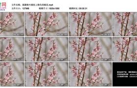 高清实拍视频素材丨摇摄春天桃枝上粉色的桃花