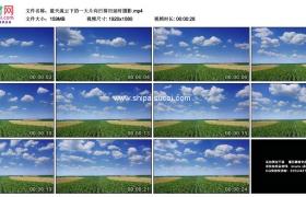高清实拍视频素材丨蓝天流云下的一大片向日葵田延时摄影