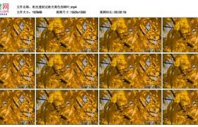高清实拍视频素材丨阳光透射过秋天黄色的树叶
