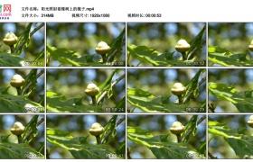 高清实拍视频丨阳光照射着橡树上的橡子