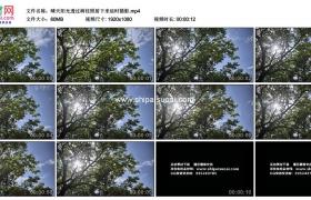 高清实拍视频素材丨晴天阳光透过树枝照射下来延时摄影